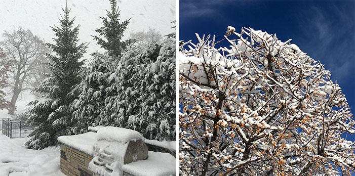week in review winter 11-24-2015