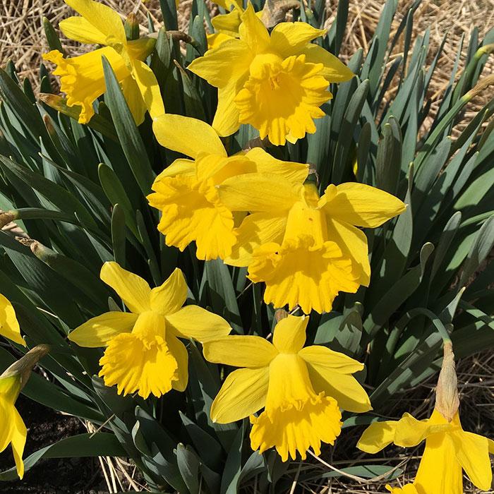 spring update 2016