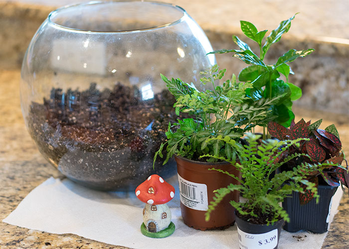 terrarium supplies 2016