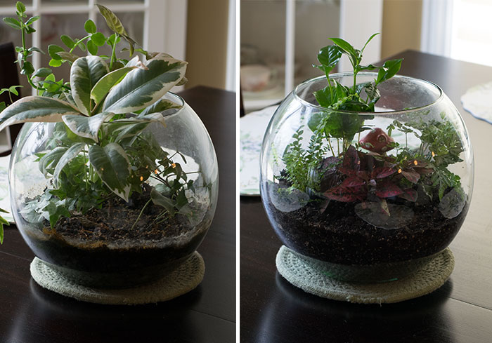 Great Updated Terrarium 2016